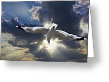 Gull Flying Under A Radiant Sunburst Greeting Card