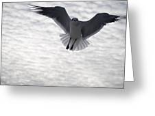 Gull From The Heavens Greeting Card