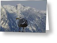 Gull In Vancouver Greeting Card