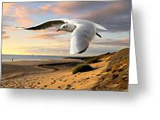 Gull On The Wing Over Beach Landscape Greeting Card