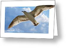 Gull - Out Of Bounds Greeting Card
