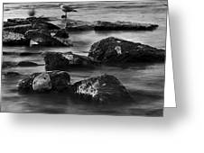 Gull Rock Greeting Card