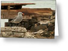 Gull Wall Greeting Card by Robert Bascelli