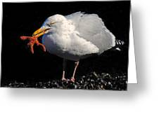Gull With Starfish Greeting Card