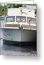 Gulls And Boat Greeting Card