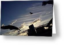 Gulls Fly Greeting Card