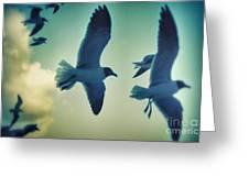 Gulls Greeting Card