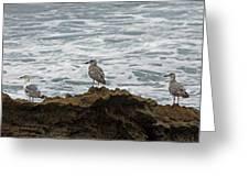 Gulls Podium  Greeting Card
