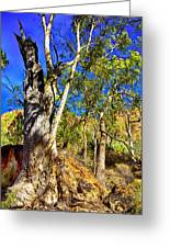 Gum Tree Ridge Greeting Card