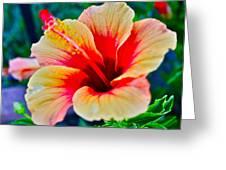 Gumamela1 Greeting Card