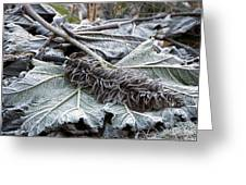 Gunnera Sp Greeting Card