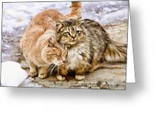 Gutter Kitties Five Greeting Card