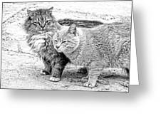 Gutter Kitties Four Greeting Card