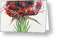 Gymea Lily Greeting Card