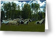 Gypsies Greeting Card