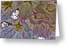 H Cherry Blossom Cont L Greeting Card