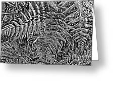 H Ferns Cont Z Greeting Card