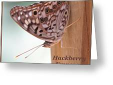 Hackberry Emperor Greeting Card