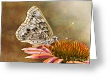 Hackberry Emperor Butterfly 2 Greeting Card