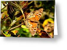 Hackberry Emperor Butterfly Greeting Card