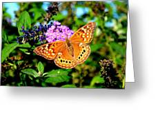 Hackberry Emperor Butterfly On Flowers Greeting Card