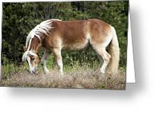 Haflinger 1 Greeting Card
