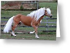 Haflinger Stallion Greeting Card