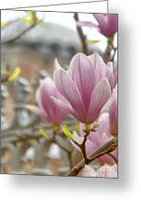Hagia Sophia Magnolia Greeting Card