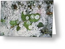 Hailstones And Leaves Greeting Card