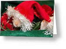 Hairless Christmas Greeting Card