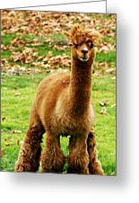Hairy Brown Gumby Aka Brown Alpaca Greeting Card