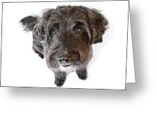 Hairy Dog Photographic Caricature Greeting Card