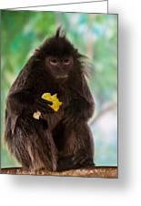 Hairy Monkey Greeting Card