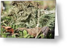 Hairy Moss Fairy Greeting Card