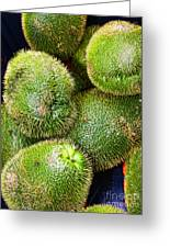 Hairy Peary Chayote Squash By Diana Sainz Greeting Card