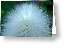Hairy Plant Greeting Card