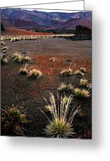 Haleakala - Red And Black Greeting Card