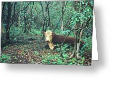 Haleakala National Park Hawaii Cow On Waterfall Trail Greeting Card