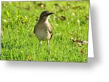 Half Beak Will Travel Greeting Card
