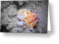 Half Buried Shell Greeting Card