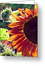 Half Of A Sunflower Greeting Card
