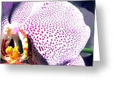 Half Orchid Greeting Card