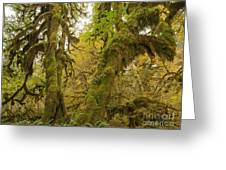 Hall Of Mosses 3 Greeting Card