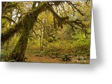 Hall Of Mosses 5 Greeting Card