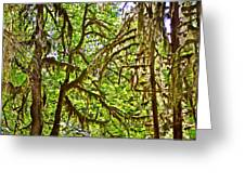 Hall Of Mosses In Hoh Rain Forest In Olympic National Park-washington Greeting Card