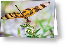 Halloween Banner Dragonfly Greeting Card by Shawn Lyte