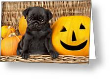 Halloween Pug Greeting Card by Greg Cuddiford