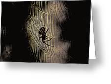 Halloween - Spider Greeting Card