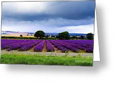 Hampshire Lavender Field Greeting Card