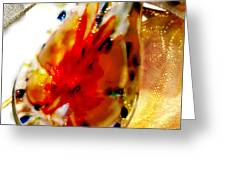 Hand Blown Glass Pendant Greeting Card by Judy Paleologos